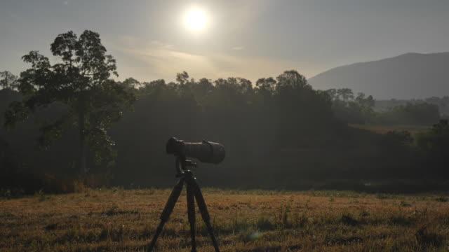 朝のカメラ野生動物と自然の背景のシーンスローモーション - デジタル一眼レフカメラ点の映像素材/bロール