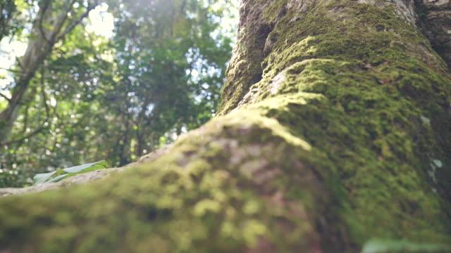 日当たりの良い森の木、根、苔のシーンスローモーション - 枝点の映像素材/bロール