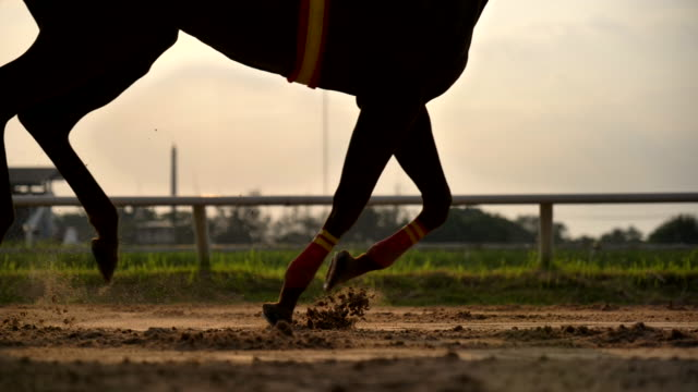 scene slow motion silhouette of horse racing - rivalry stock videos & royalty-free footage