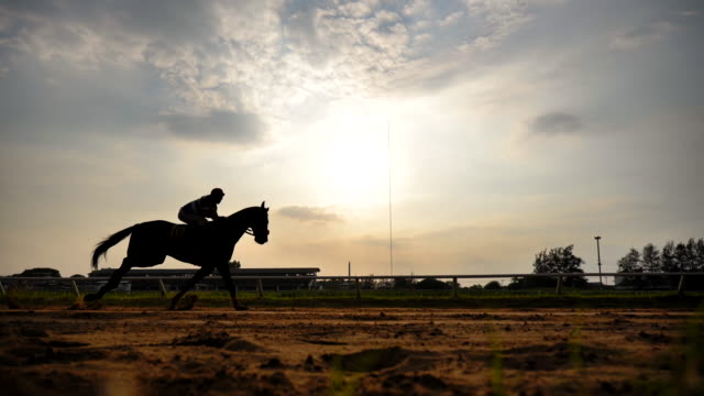 scene slow motion silhouette of horse racing - horse stock videos & royalty-free footage