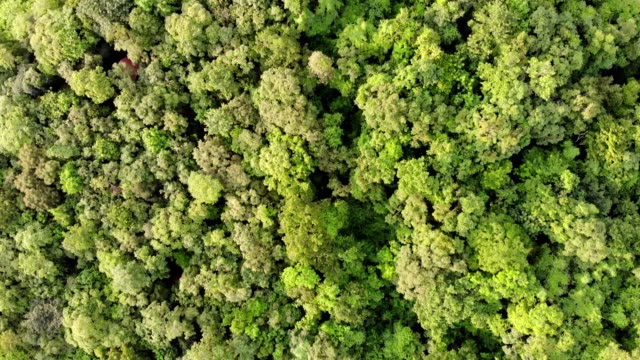scenery green leafy forest be abundant in natural park - melting stock videos & royalty-free footage