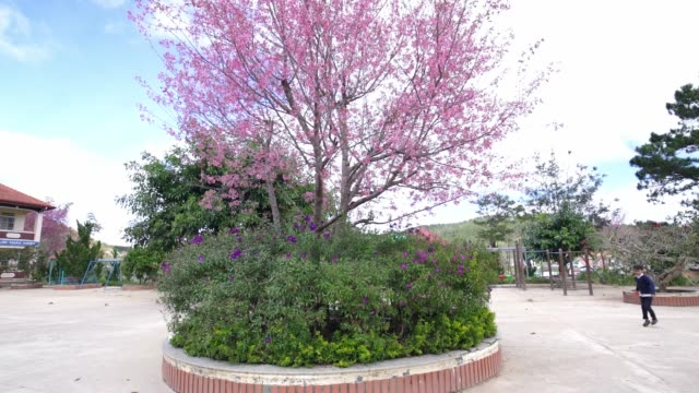 scenery of an upland primary school in spring morning with cherry blossom trees - first day of school stock videos & royalty-free footage