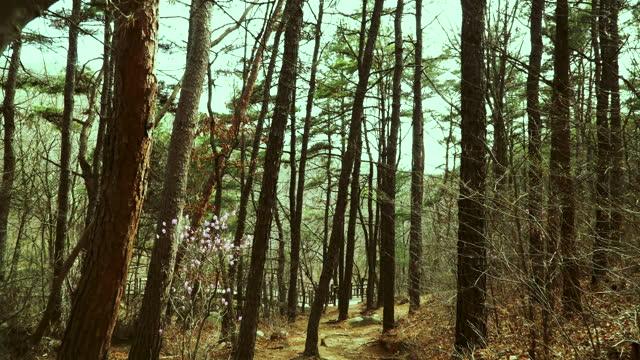 vídeos de stock e filmes b-roll de scenery of moving in forest / south korea - vedação