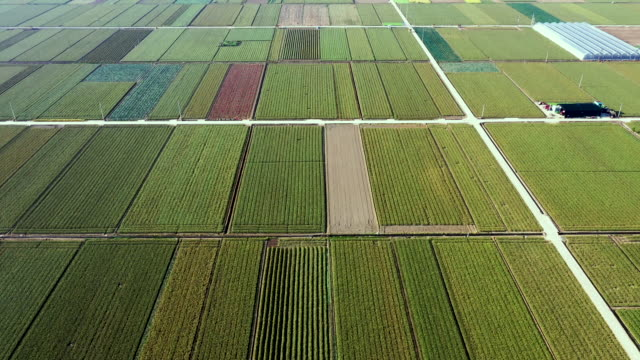 scenery of onion and garlic field in changnyeong-gun, gyeongsangnam-do, south korea - rectangle stock videos & royalty-free footage