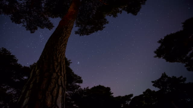 scenery of star field at imhan-ri park with pine tree(local landmark) - local landmark stock videos and b-roll footage