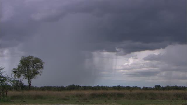 scenery of storm cloud pouring rain in okavango delta - torrential rain stock videos & royalty-free footage