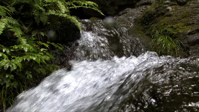 scenery of tranquil, beautiful nature with stream - okutama area stock videos & royalty-free footage