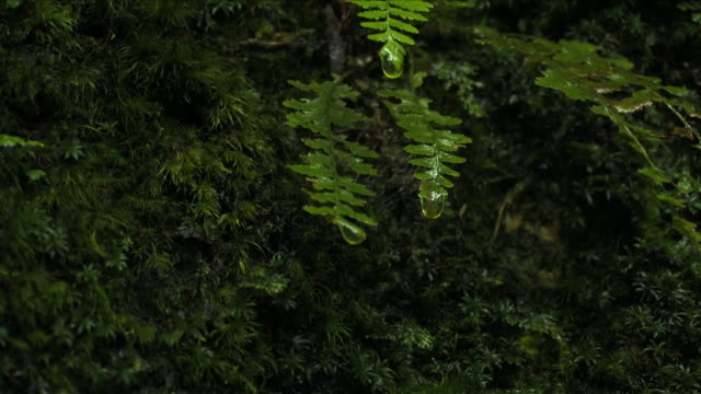 scenery of tranquil, beautiful nature with waterdrops from leaf - okutama area stock videos & royalty-free footage