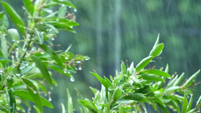 vídeos de stock, filmes e b-roll de paisagem vista em dia chuvoso - vegetable garden