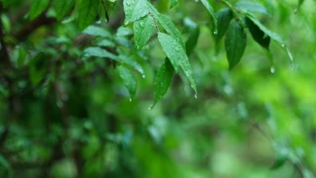 vídeos de stock, filmes e b-roll de paisagem vista em dia chuvoso - estampa de folha
