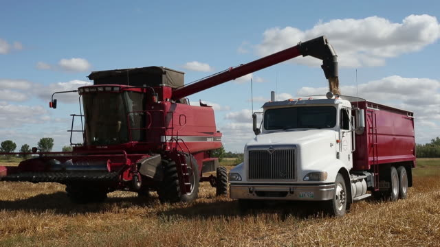 scenes from oat harvest dacotah manitoba canada on wednesday august 21 2019 - cereal plant stock videos & royalty-free footage