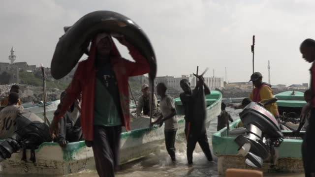 Scenes in the old fishing harbour in Mogadishu with fresh sharks and sail fish being unloaded