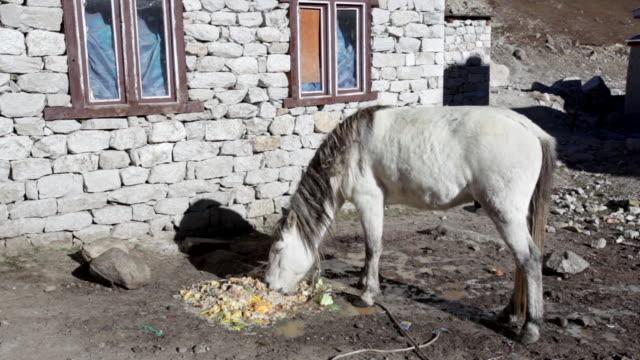 scenes of kathmandu and mount everest, nepal - leftovers stock videos & royalty-free footage