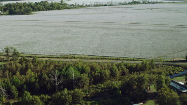 Scenic Aerial Shot Over Cotton Fields
