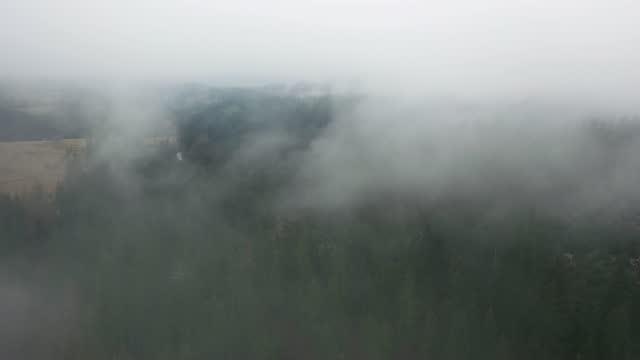 vídeos y material grabado en eventos de stock de vista aérea escénica del bosque en las montañas en la niebla - pinar