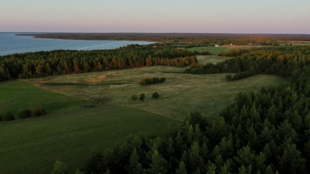 malerische luftaufnahme des waldes in der nähe des sees in finnland - finnland stock-videos und b-roll-filmmaterial