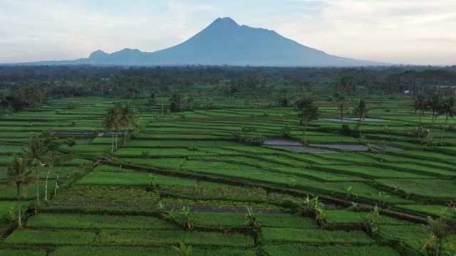 scenic aerial view of rice fields near merapi volcano on java - java stock videos & royalty-free footage