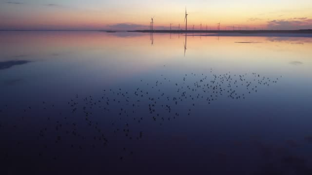 scenic aerial view of seagulls on pink salt lake near  wind turbine station - sea bird stock videos & royalty-free footage