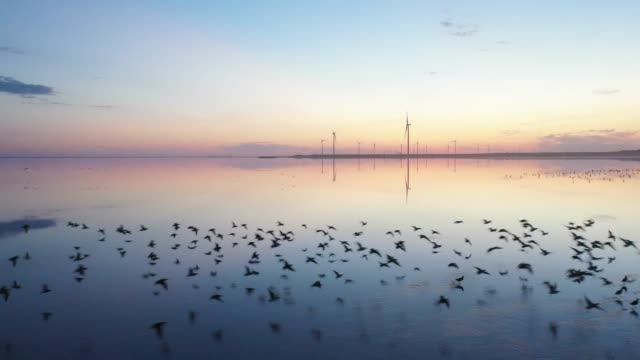 scenic aerial view of seagulls on pink salt lake near  wind turbine station - tranquility stock videos & royalty-free footage