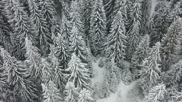 scenic aerial view of the pine tree mountain forest during snowfall and blizzard - pine woodland stock videos & royalty-free footage