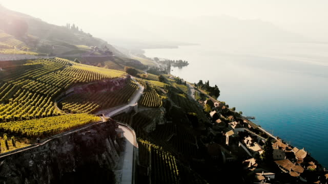 scenic aerial view of vineyards near geneva lake - switzerland stock videos & royalty-free footage