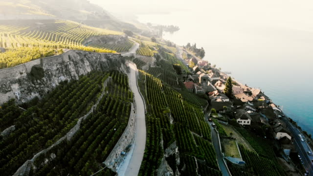 Scenic aerial view of vineyards near Geneva lake