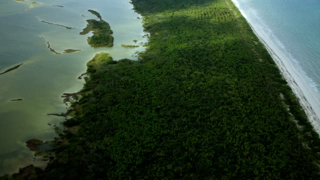 scenic coastal landscape in bioreserve - yucatan peninsula stock videos and b-roll footage