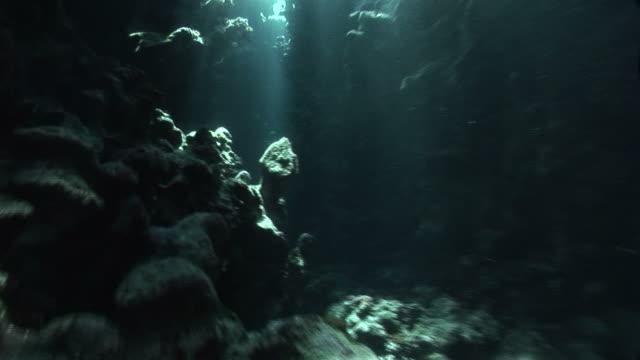 scenic coral hole. red sea - undersea stock-videos und b-roll-filmmaterial
