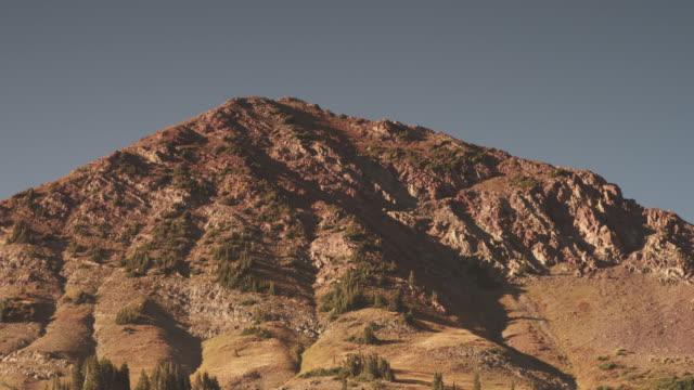 Scenic forest in Utah mountains, tilt up
