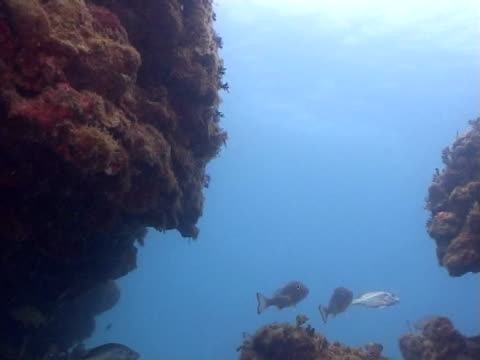 scenic of reef with  fish milling - medium group of animals stock videos & royalty-free footage