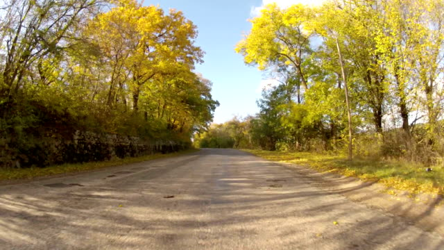 scenic route through forest, GoPro