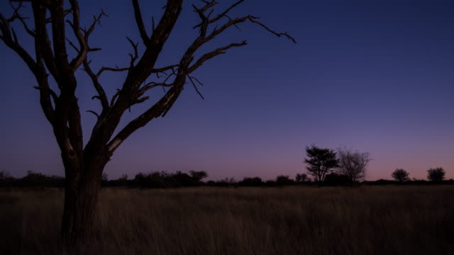 A scenic static sunset / day to night timelapse transition of a dead Acacia Tree with the Milky Way twisting through a dark landscape scene and the moon rises to light up the landscape with focus pull