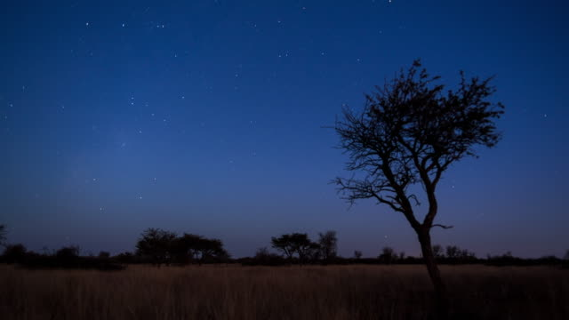 A scenic static sunset / day to night timelapse transition of an Acacia Tree with the Milky Way twisting through a dark landscape scene and the moon rises to light up the landscape