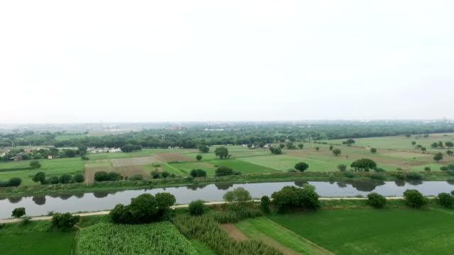 stockvideo's en b-roll-footage met schilderachtig uitzicht van landbouw grond - sorgo