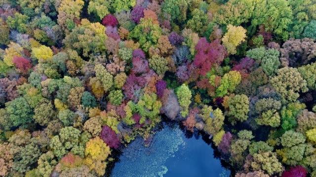 vídeos de stock e filmes b-roll de scenic view of autumn foliage in new jersey - nova jersey