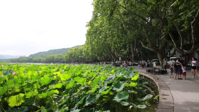 Scenic View Of Beishan Road By The West Lake,Hangzhou,China