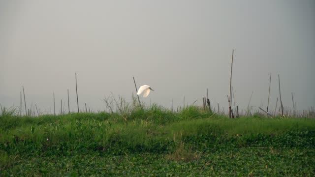 インレー湖の鳥の景色 - リフレクション湖点の映像素材/bロール
