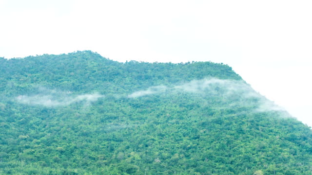 scenic view of fog flowing on tropical trees on mountains, time-lapse video - digital composite stock videos and b-roll footage