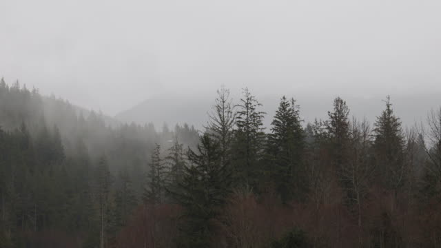 scenic view of forest and mist during rainstorm - fog stock videos & royalty-free footage