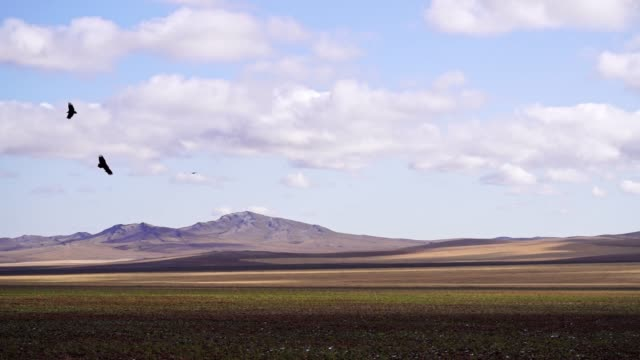scenic view of gobi desert steppe  at sunset - steppe stock videos & royalty-free footage