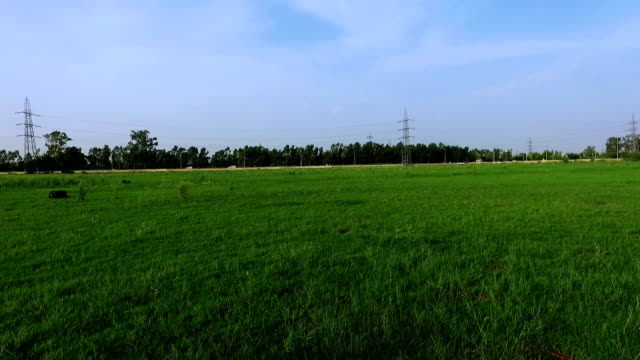 scenic view of green grass outdoor - panoramic stock videos and b-roll footage