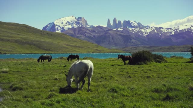 scenic view of horses in torres del paine national park - geographical locations stock videos & royalty-free footage