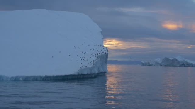 scenic view of icebergs in disko bay with birds perching on it against sky during sunset - perching stock videos & royalty-free footage