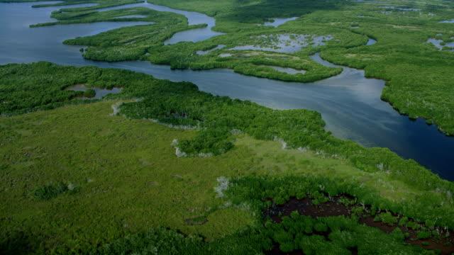 vídeos de stock, filmes e b-roll de scenic view of lagartos river in mexico - yucatán