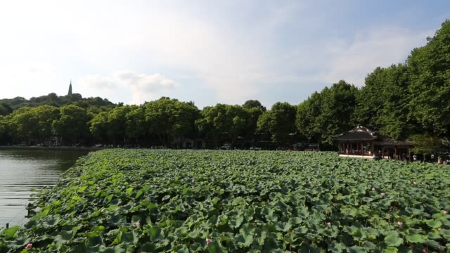 scenic view of lotus field at lakeshore of the west lake,hangzhou,china - lakeshore stock videos & royalty-free footage