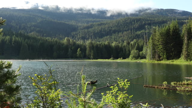 scenic view of mountain lake and forest - harmony stock videos & royalty-free footage