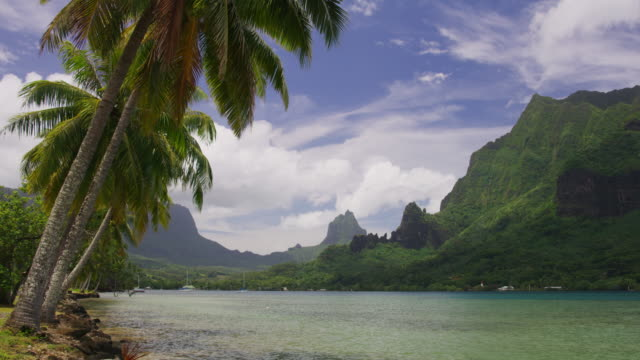 scenic view of palm trees leaning over bay in tahiti / moorea, french polynesia - taiti stock videos & royalty-free footage