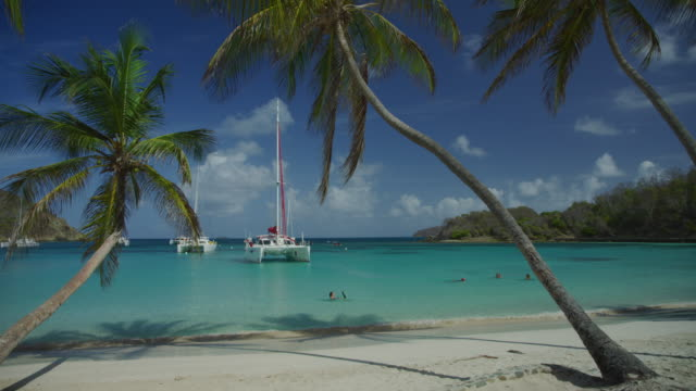 scenic view of people swimming at ocean beach near palm trees and catamarans / salt whistle bay, mayreau, saint vincent and the grenadines - bay of water stock videos & royalty-free footage