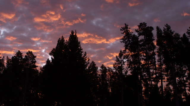 ws pan scenic view of romantic sky and forest at sunset / yellowstone national park, wyoming, united states - romantic sky stock videos & royalty-free footage
