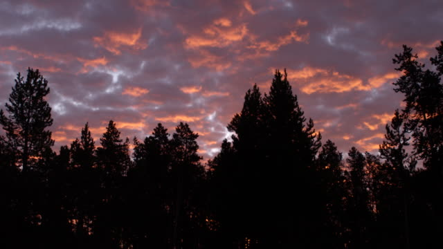 ws scenic view of romantic sky and forest at sunset / yellowstone national park, wyoming, united states - romantic sky stock videos & royalty-free footage